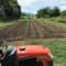 耕起し畝づくりの後‥白菜苗50本を移植