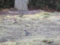 小鳥は11時頃になると、群れで立ち寄ります