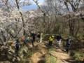 登山道に桜のトンネルが‥