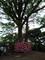 辺津宮-むすびの樹