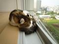 [ねこ][ねこ][眠り猫]朝だよ〜