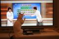 [猫][ねこ]お天気コーナーに猫じゃらしが!?