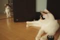 [ねこ][猫]悪い子はいね〜が〜?