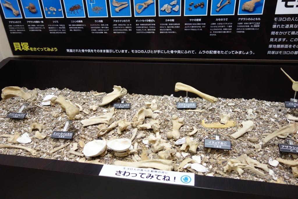 貝塚から出土した海獣などの骨に触れるコーナー