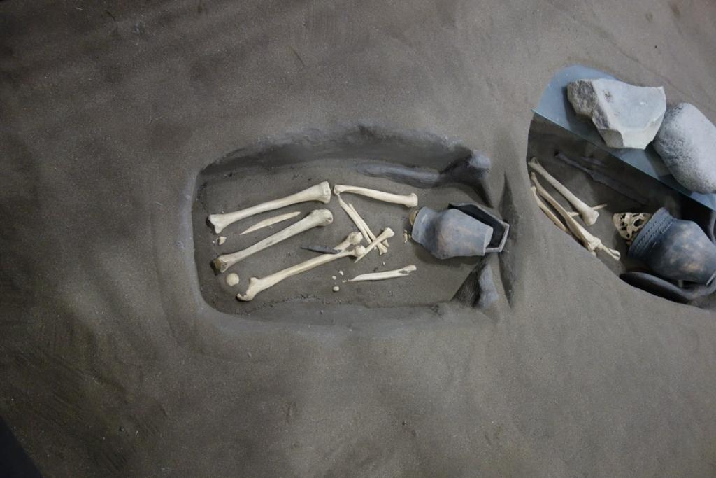 オホーツク文化人の骨3