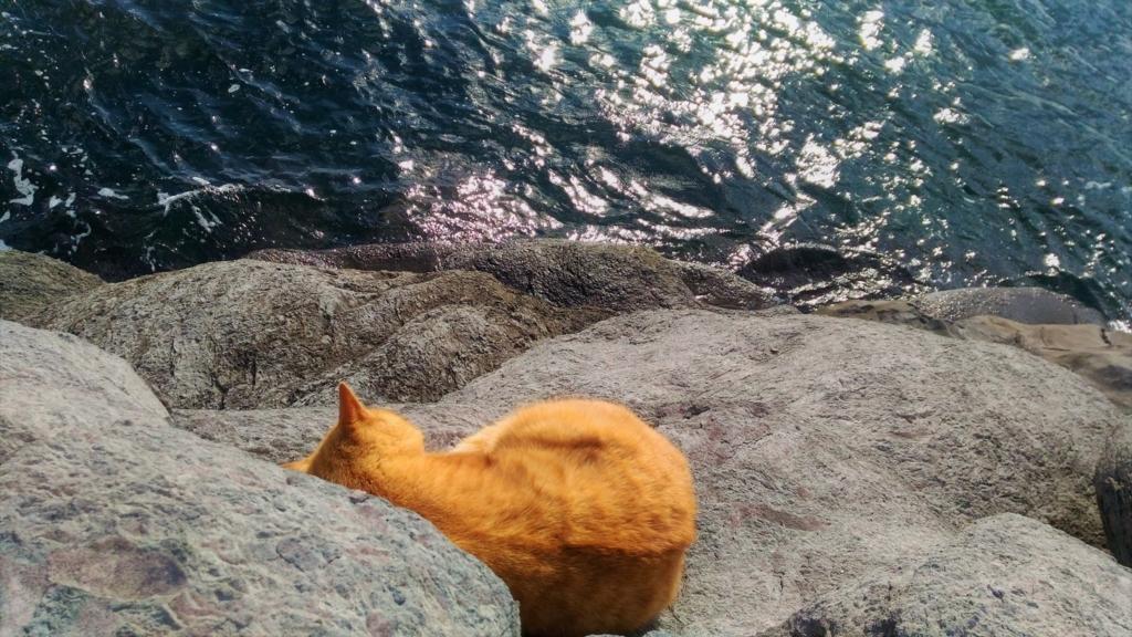 海すれすれのところに寝ている猫