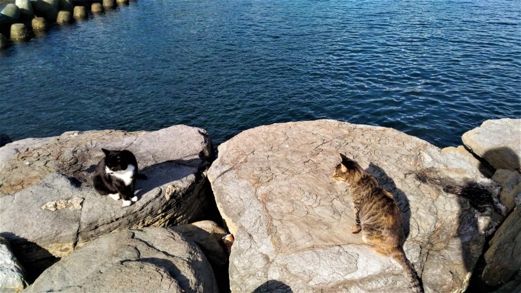 桟橋の猫もやっぱり人間には無関心