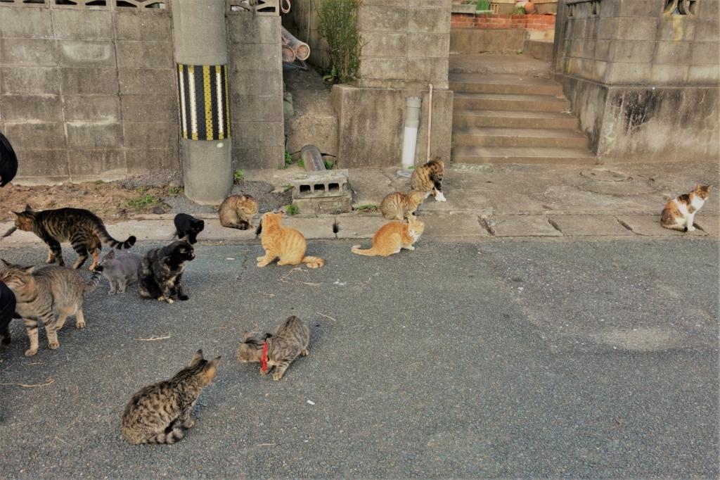 相島港付近にたむろする、大量のお猫様