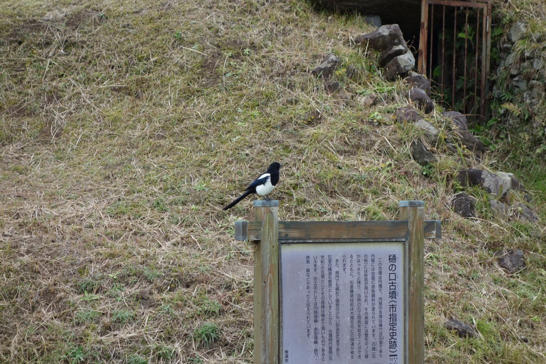 案内板に野鳥がとまってました