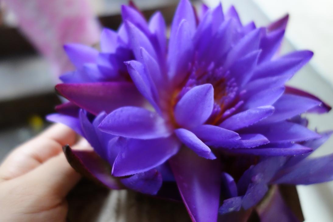 お供え物の花