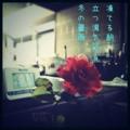 [iphoneography][photoikku][jhaiku][instagram][fxcamera][俳句]凍てる朝 立つ湯気彩る 冬の薔薇 [山乃鯨]