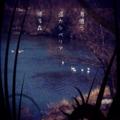 [iphoneography][photoikku][instagram][pixlrexpress][jhaiku][haiku][俳句]鳥憶う 遥かシベリア 帰る森 [山乃鯨]