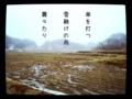 [iphoneography][photoikku][pixlrexpress][procamera][jhaiku][haiku][俳句]傘を打つ 雪融けの雨 蕭々たり [山乃鯨]