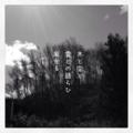 [iphoneography][photoikku][instagram][jhaiku][haiku][俳句]木と空と 雲との語らひ 風光る [山乃鯨]