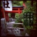 [photoikku][instagram][iphoneography][jhaiku][poem][俳句]虫が鳴く 雨の香匂う 里の秋 [山乃鯨]