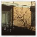 [photoikku][instagram][jhaiku][poem][俳句][季語][五七五][写真俳句]雪晴れや ゆらゆら影の ひなたぼこ [山乃鯨]