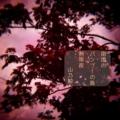 [photoikku][jhaiku][haiku][poem][写真俳句][フォト俳句][夏][summer][俳句][季語]南国の バンブーの島 熱帯夜 [山乃鯨]