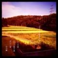 [photoikku][jhaiku][haiku][poem][写真俳句][フォト俳句][秋][fall][autumn][俳句]入り日時 むせる稲の香 まわり道 [山乃鯨]