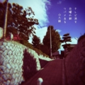 [photoikku][jhaiku][haiku][poem][写真俳句][フォト俳句][秋][fall][autumn][俳句]テレビ消す 日曜の朝 ツバメ去る [山乃鯨]