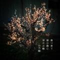[photoikku][jhaiku][haiku][snapseed][春][spring][俳句][季語][写真俳句][フォト俳句]香り来て 袋小路に 浮かぶ梅 [山乃鯨]