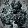 [photoikku][jhaiku][haiku][卯の花腐し][summer][夏][俳句][季語][写真俳句][フォト俳句]花腐(くた)す 三千世界 雨止まず [山乃鯨]