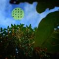 [photoikku][jhaiku][haiku][autumn][poetry][季語][写真俳句][snapseed][photohaiku][フォト俳句]山河至美(しび) 木犀の香に 始まれり [山乃鯨]案外雨雪好き。秋冬の