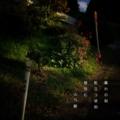 [photoikku][jhaiku][haiku][autumn][poetry][季語][写真俳句][snapseed][photohaiku][フォト俳句]暮れの刻 粒立つ琥珀 菊包(くる)む [山乃鯨]