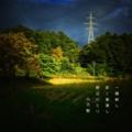 [photoikku][jhaiku][秋][autumn][poetry][季語][写真俳句][snapseed][photohaiku][フォト俳句]一陽(いちひ)射し 吹く雁渡し 野辺ひとり [山乃鯨]