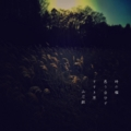 [photoikku][jhaiku][秋][autumn][poetry][季語][写真俳句][snapseed][photohaiku][フォト俳句]時の檻(おり) 惑(まど)う自分ぞ すすき原(はら) [山乃鯨]