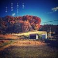 [photoikku][jhaiku][冬][winter][poetry][季語][写真俳句][snapseed][photohaiku][フォト俳句]日曜日 お陽さま香る 枯れ野道 [山乃鯨]