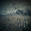 [photoikku][jhaiku][冬][winter][poetry][季語][写真俳句][snapseed][photohaiku][フォト俳句]野凛たり 凍つる結晶 陽の震(ふる)ふ[山乃鯨]