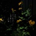 [photoikku][jhaiku][夏][summer][poetry][季語][写真俳句][snapseed][photohaiku][フォト俳句]草光り 子ら影負(お)ひて 初夏駆ける[山乃鯨]