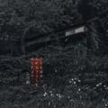 [photoikku][jhaiku][夏][summer][poetry][季語][写真俳句][snapseed][photohaiku][フォト俳句]憂き覚ゆ 誰居ざるらむ みじかよの[山乃鯨]