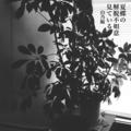 [jhaiku][夏][summer][poetry][季語][写真俳句][haiku][photohaiku][poem][フォト俳句]夏蝶の 解脱不如意 見ている[山乃鯨]