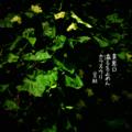 [jhaiku][夏][summer][poetry][季語][写真俳句][haiku][photohaiku][フォト俳句][microportry]異界口 溢るを止めん カラスウリ[山乃鯨]