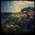 [jhaiku][夏][写真俳句][poetry][季語][photohaiku][micropoetry][summer][フォト俳句][haiku]合歓の夢 風は南国 熱帯夜[山乃鯨]