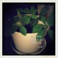 [jhaiku][夏][写真俳句][poetry][季語][photohaiku][micropoetry][summer][フォト俳句][haiku]忘れ得ぬ 約束あまた 根無し草[山乃鯨]