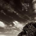 [jhaiku][夏][写真俳句][poetry][季語][photohaiku][micropoetry][summer][フォト俳句][haiku]空蝉の 記憶も持てぬ 彼の折は[山乃鯨]