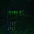 [jhaiku][秋][fall][写真俳句][poetry][季語][photohaiku][micropoetry][autumn][フォト俳句]降りすさぶ 雨月(うげつ)しぶく根 伸びうねる[山乃鯨]