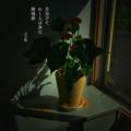 [jhaiku][秋][fall][写真俳句][poetry][季語][photohaiku][micropoetry][autumn][フォト俳句]月浴びて わくらば(病葉)浄化 廃墟跡[山乃鯨]