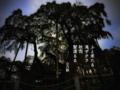 [jhaiku][秋][fall][写真俳句][poetry][季語][photohaiku][micropoetry][autumn][フォト俳句]ふと来たる 滝ザクラ 秋雨(しうう) 髪濡るる[山乃鯨]