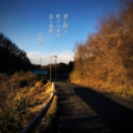 [jhaiku][冬][haiku][写真俳句][poetry][季語][photohaiku][micropoetry][winter][フォト俳句]愛(いと)し陽よ 粒立つ氷雨 急(せ)く家路[山乃鯨]