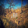 [jhaiku][春][haiku][写真俳句][poetry][季語][photohaiku][micropoetry][spring][フォト俳句]集(つど)ふ鳥 深山(みやま)残雪 陽は薫る[山乃鯨]