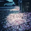 [jhaiku][春][haiku][写真俳句][poetry][季語][photohaiku][micropoetry][spring][フォト俳句]散りし花 況(ま)して薫らめ ひとり老ゆ[山乃鯨]