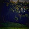 [jhaiku][春][haiku][写真俳句][poetry][季語][photohaiku][micropoetry][spring][フォト俳句]ひとり雨 想へば匂ふ 花けはひ[山乃鯨]