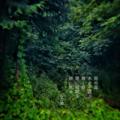 [jtanka][短歌][tanka][写真短歌][poetry][phototanka][micropoetry][フォト短歌][poem][shortpoem]雨の森 水の子遊ぶ 輝く樹 闇に眼開き 暁に吼(ほ)ゆ[山乃鯨]