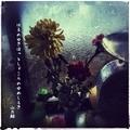 [jhaiku][春][haiku][写真俳句][poetry][季語][photohaiku][micropoetry][spring][フォト俳句]はるのゆきほっとしょこらのゆめしろき[山乃鯨]