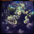 [jhaiku][春][haiku][写真俳句][poetry][季語][photohaiku][micropoetry][spring][フォト俳句]酔ひ狂ひ 蜜香(みつか)舞ふ鳥 花吹雪[山乃鯨]