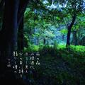 [jtanka][短歌][tanka][写真短歌][poetry][phototanka][micropoetry][フォト短歌][poem][shortpoem]雨の森 水棲進化 立て!魚人 火の香に踊り 翳りし瞳の[山乃鯨]