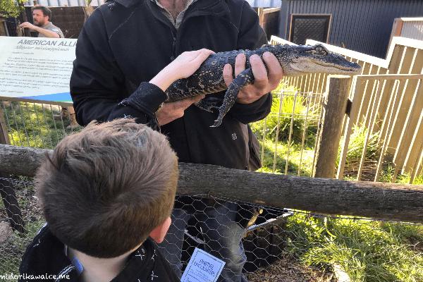 オーストラリア ワニ 動物園 メルボルン バララット